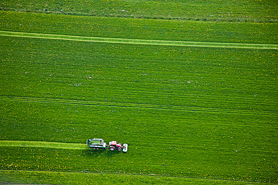 Spring grass - p1120m948210 by Siebe Swart