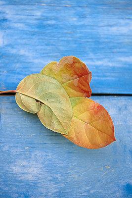 Autumn foliage - p533m1152683 by Böhm Monika