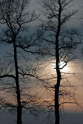 Bäume im Winter - p476m1055481 von Ilona Wellmann