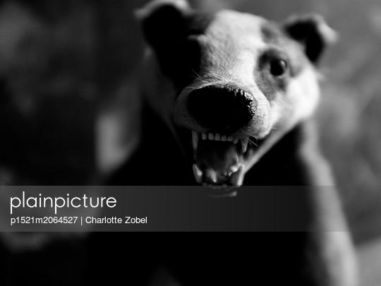 Badger - p1521m2064527 by Charlotte Zobel