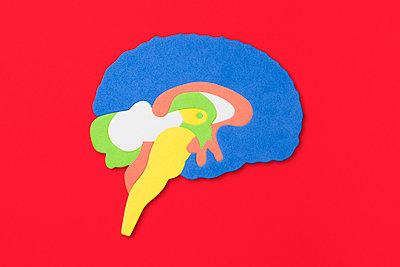 Gehirn - p1094m1015432 von Patrick Strattner