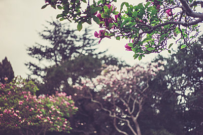 Magnolia - p1150m1123687 by Elise Ortiou Campion