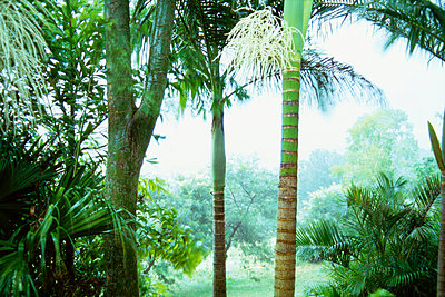 Rainforest - p3493012 by Tamsyn Hill
