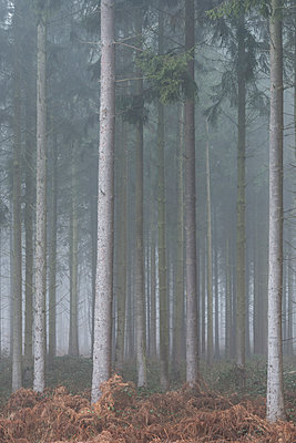 Forest in the fog - p401m1216941 by Frank Baquet