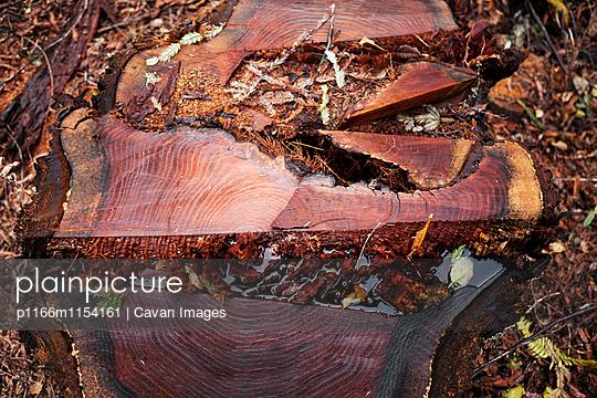 p1166m1154161 von Cavan Images