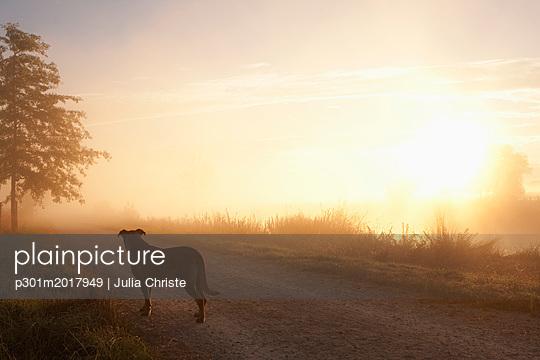 p301m2017949 von Julia Christe