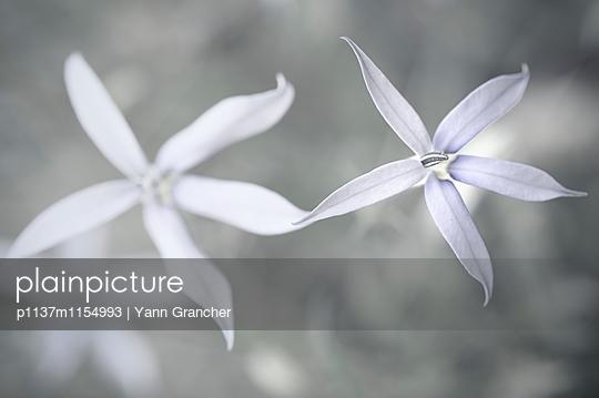 Weiße Blüten Nahaufnahme - p1137m1154993 von Yann Grancher