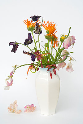 Wilted Flowers In Vase - p1562m2168145 by chinch gryniewicz
