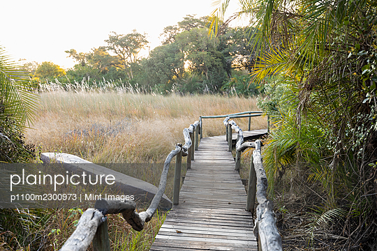 Wooden walkway at a safari camp in the Okavango Delta, Botswana. - p1100m2300973 by Mint Images