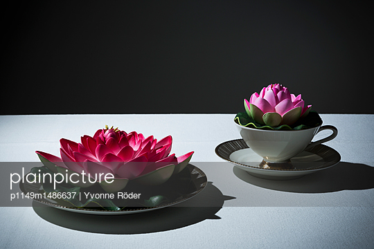 Water lilies on coffee table
