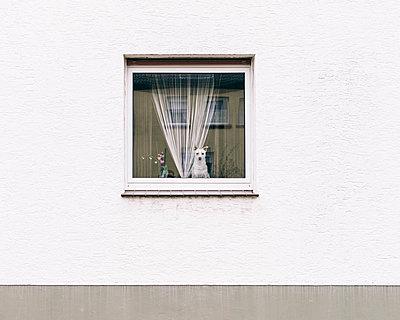 Hund hält Ausschau - p1085m880908 von David Carreno Hansen