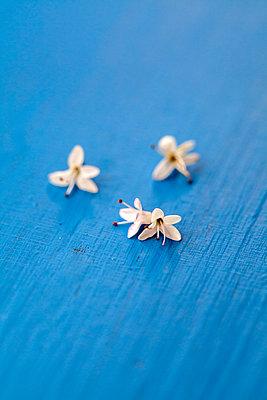 Blüten der Strauchveronika - p1248m2179136 von miguel sobreira