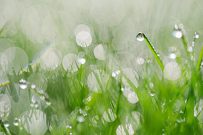 Dew on grass selective focus, close up - p300m2042963 by Martin Rügner