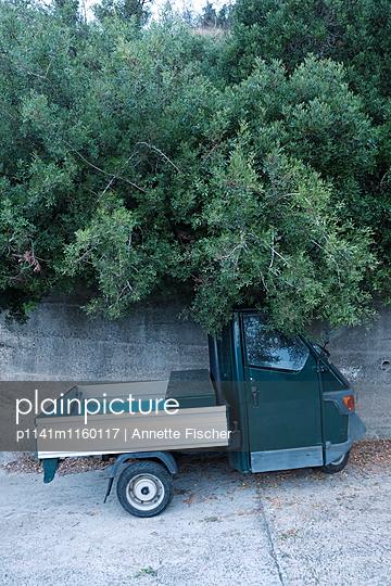 Ape am Hang - p1141m1160117 von Annette Fischer