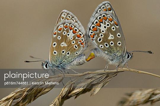 p816m744881 von Kerstin Mertens