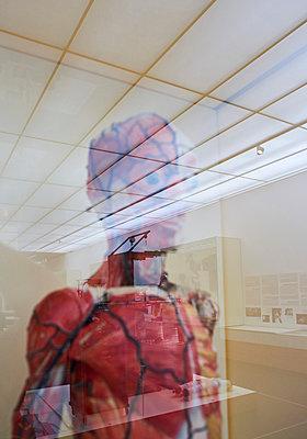 Anatomical model Hygiene Museum Dresden - p390m1221949 by Frank Herfort