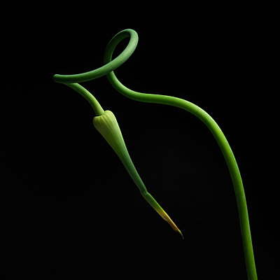 Plant in studio - p813m916237 by B.Jaubert