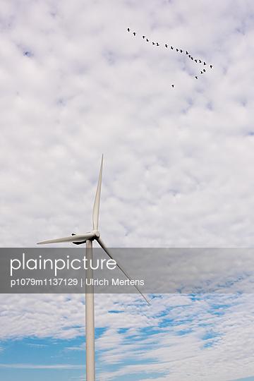 Vogelzug vorbei an einem Windrad - p1079m1137129 von Ulrich Mertens