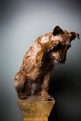Terrier - p1076m858966 by TOBSN