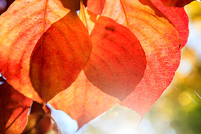 Autumn - p417m1183572 by Pat Meise