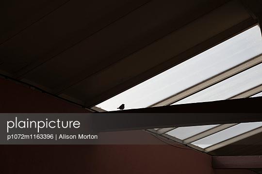 p1072m1163396 von Alison Morton