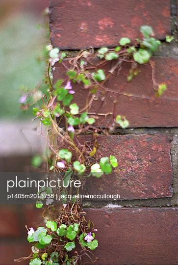 Kletterpflanze - p1405m2013758 von jacquelinemccullough