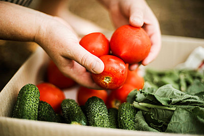 Woman holding red tomatoes  in garden - p1166m2234992 by Cavan Images