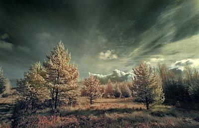 Mittelrussland im Herbst - p1653m2232305 von Vladimir Proshin