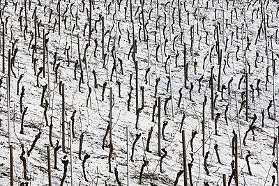 Weinberge im Winter - p248m1004115 von BY