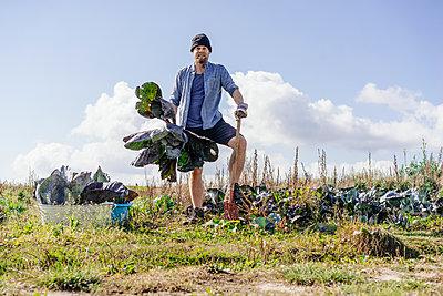 Farmer erntet Rotkohl  - p586m1208829 von Kniel Synnatzschke