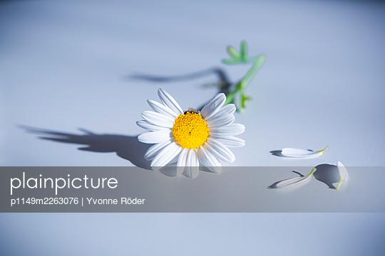 Blossom - p1149m2263076 by Yvonne Röder