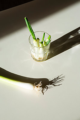 Regrowing green onions - p1149m2288222 by Yvonne Röder