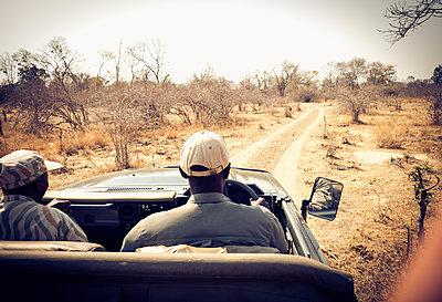 Auf Safari im Südluangwa-Nationalpark - p842m1538220 von Renée Del Missier