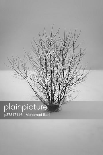 p37817146 von Mohamad Itani