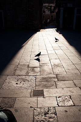 Shadow play - p1059m918674 by Philipp Reiss