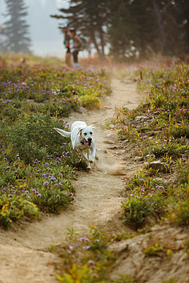 Dog running on field - p1166m1526899 by Cavan Images