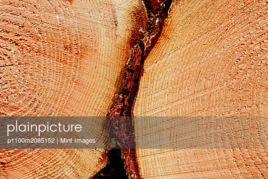 Sawn ends of timber logs, cut wood, with wood grain pattern.  - p1100m2085152 by Mint Images