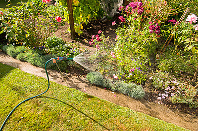 hose pipe and garden - p1201m1039912 by Paul Abbitt