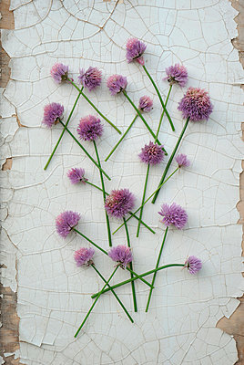 Blossoms of chives - p300m1023480f by Gianna Schade
