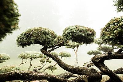 Zen tree - p445m1119664 by Marie Docher
