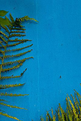 Aloft - p627m1035190 by Chris Keller