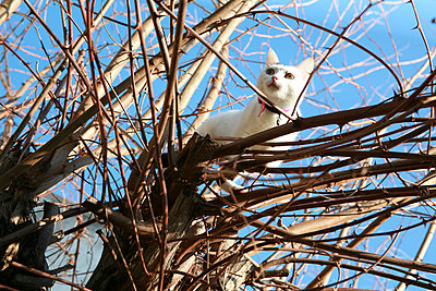 Cat in a tree - p927m916081 by Florence Delahaye