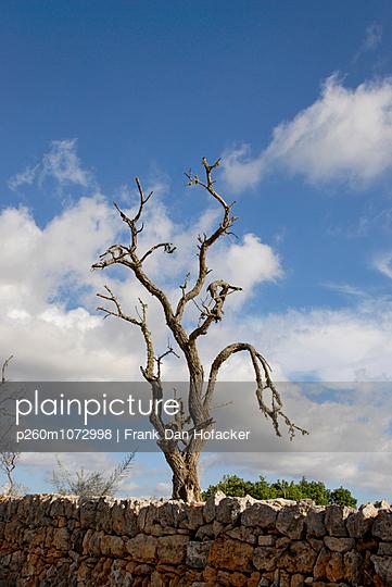 Forest dieback - p260m1072998 by Frank Dan Hofacker