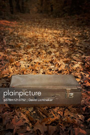 Suitcase in a forest - p378m1213752 by David Lichtneker