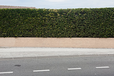 Hedge at the roadside - p212m901154 by Edith M. Balk