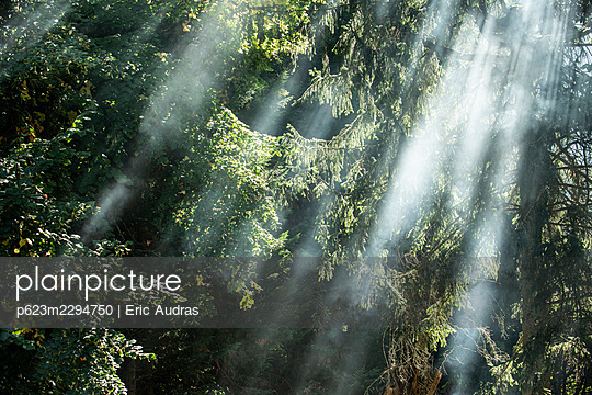 Sunlight filtering through trees in public park - p623m2294750 by Eric Audras
