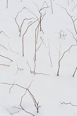 Zweige im Schnee - p1164m951958 von Uwe Schinkel