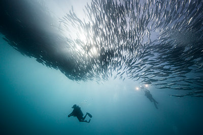Underwater view of two scuba divers diving below shoaling jack fish in blue sea, Baja California, Mexico - p924m1519373 by Rodrigo Friscione