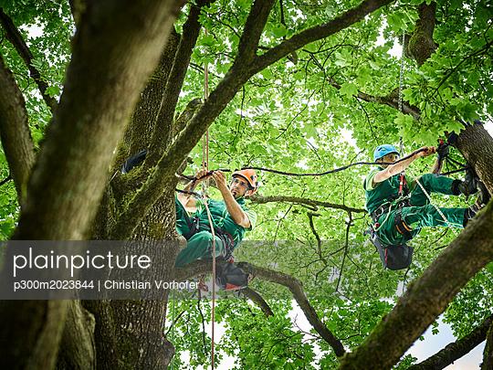 plainpicture - plainpicture p300m2023844 - Tree cutters hanging on rop... - plainpicture/Westend61/Christian Vorhofer