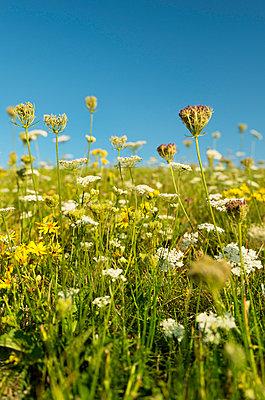 Wild flowers - p1132m925494 by Mischa Keijser